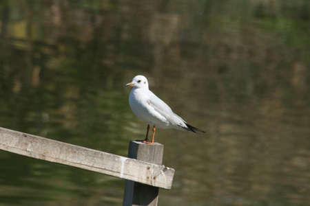 goodliness: Seagull standing