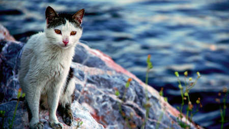 Cat sitting on the rocks near the sea Stock fotó