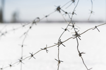 tangled barbed wire. focus with shallow depth of field. closeup