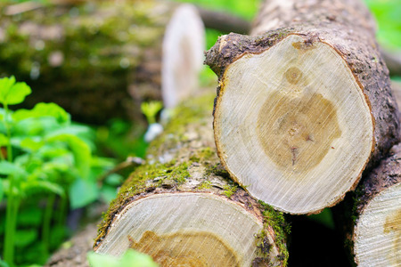 raw materials: cut trees for firewood