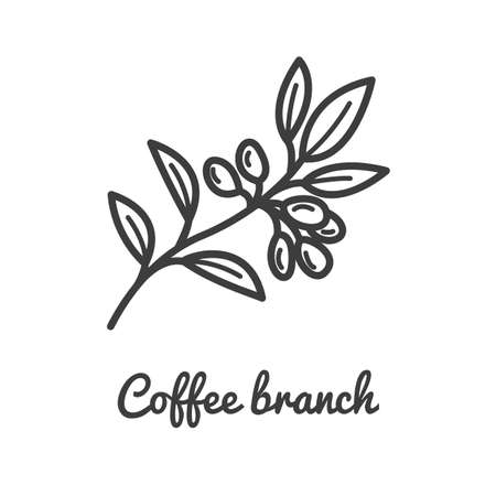 Coffee branch icon. Coffee plant. Branch of coffee icon in line style design. Vector illustration.