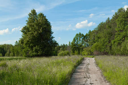 road through summer field
