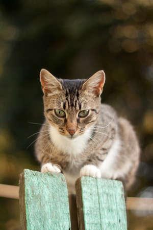 Cat on the wooden fence Standard-Bild