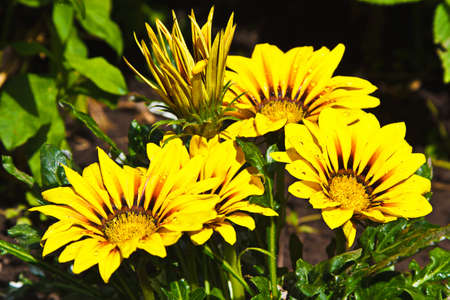 Yellow flowers after rain
