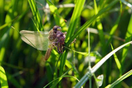 newborn dragonfly