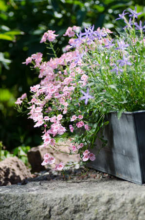 Cottage garden - beutiful flowers in pots photo