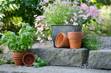 Cottage garden - beautiful flowers in pots