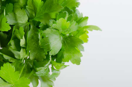 Fresh parsley on white background with copy space Stock Photo