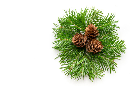 pine wreath: Isolated fir pine wreath with a cones Stock Photo