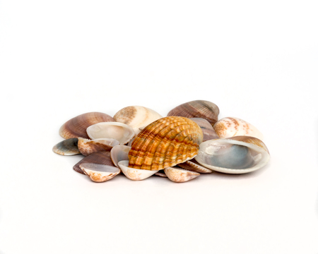 Collection of a different colored shells