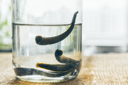 Leech therapy. Medicinal Leech in jar. Stock fotó