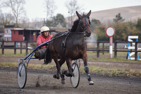 Testing of horses of trotting breeds at the racetrack. Check in. The Republic of Khakassia, Russia.