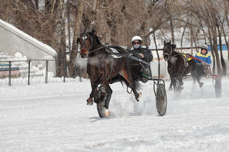 Competitions in equestrian sport in winter. Reportage. Runs-test of horses rysistyh rocks n playfulness in the trot.  Khakassia. Siberia.