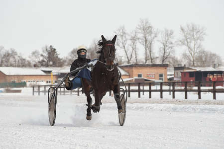 Competitions in equestrian sport in the winter. Reportage. Runs - test horses of trotting breeds and playfulness in running trot. Khakassia. Siberia.