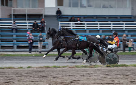 Tests of horses of trotting breeds on fastness in running trot. Abakan, Republic of Khakassia on May 12, 2018.