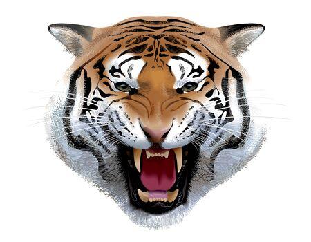 Tiger Head. Illustration