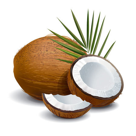 Coconut with leaves. Illustration