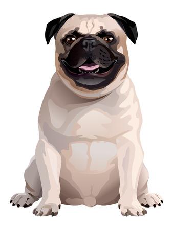 Funny dog. Pug