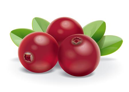 arandanos rojos: cranberries