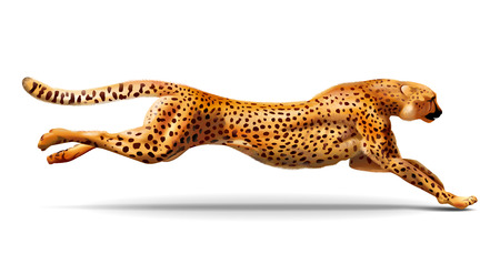 Leopard is running. Detailed illustration