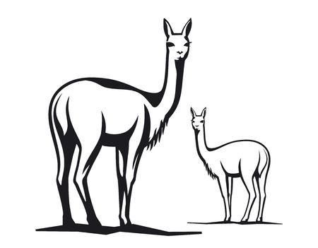 Vicuna illustration