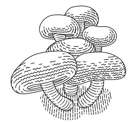Mushrooms. Shiitake illustration Stock Photo