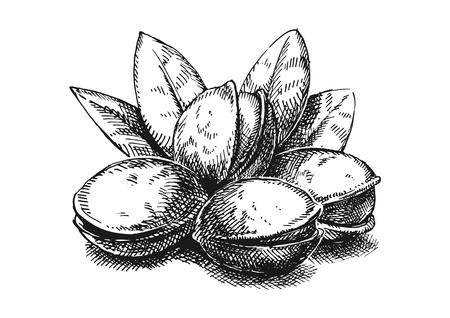 Pistachios sketch illustration