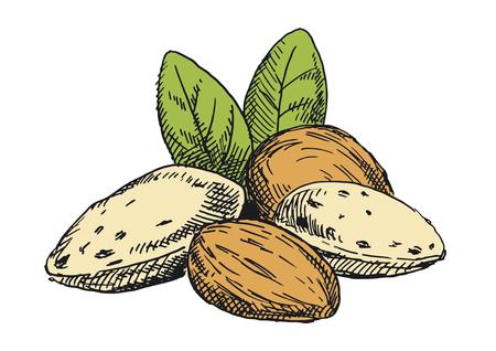Almonds illustration. Colored version Standard-Bild - 117360020
