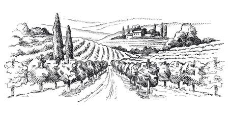 vineyard illustration