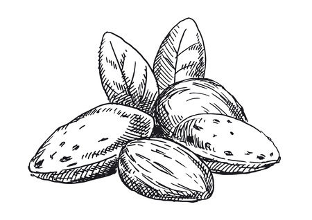 Almonds illustration. Black and white version 스톡 콘텐츠 - 117360024