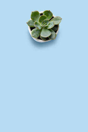 Creative concept photo of succulent flower with hearts and note card on blue background.