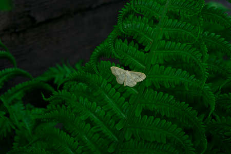 Natural environment contrast photo of fern grass flowers with moth.