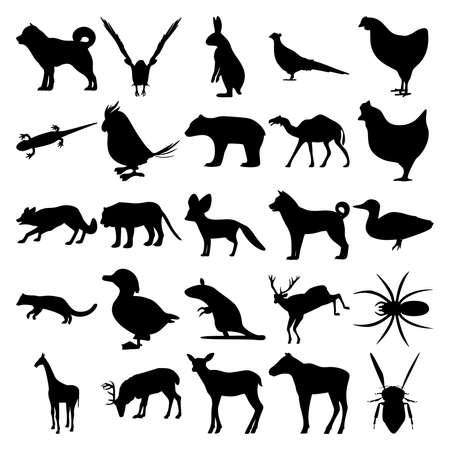 Set of 25 animals. Goshawk, Hare, Pheasant, Salamander, Parrot, Bear, Camel, Chicken, Tiger, Fennec fox, Dog, Pacific Fisher, Duck, Rat, Deer, Spider, Giraffe, Reindeer, Elk, Bug. Illusztráció