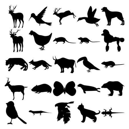 Set of 25 animals. Colibri, Duck, Elk, Chicken, Armadillo, Poodle, Cougar, Dog, Bull, Toucan, Rat, Deer, Syrian Hamster, Butterfly, Seal, Grizzly Bear, Bird, Goshawk, Kitten, Lizard. Vecteurs