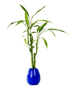 격리 된 배경에 파란색 꽃병에 녹색 식물. 스톡 콘텐츠