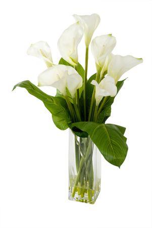 격리 된 배경에 꽃병에 녹색 식물.