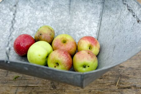 Seven small apples weighed on a tin scale.  photo