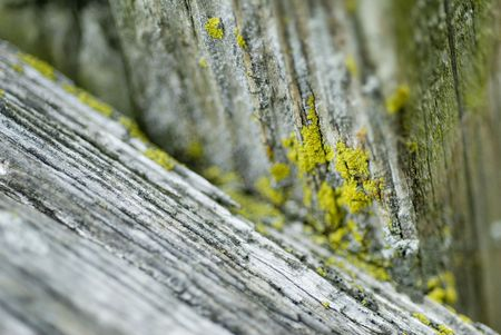 Speckles of yellow paint  on wood photo