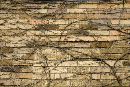 벽돌 구조에 덩굴의 무리