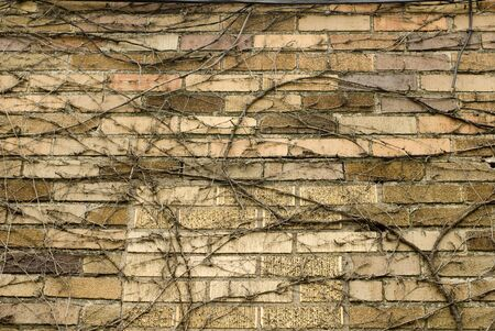 multitude: Multitude of vines on a brick structure Stock Photo