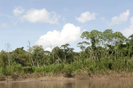 A view of the amazon river in the Tambopa Province on a sunny day. Stok Fotoğraf