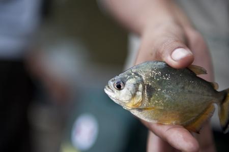 Holding a peruvian yellow piranha in the Amazon in Puerto Maldonado.