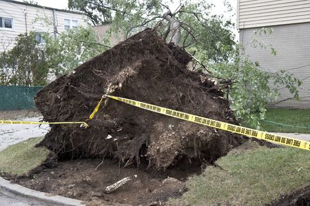 arbol de problemas: Un gran árbol cayó sobre una casa después de una tormenta de viento.