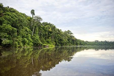 아마존에서 Tambopata 지방에서 강의보기. 스톡 콘텐츠
