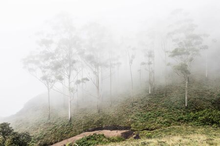 kochi: View of the hill slopes of Western Ghats while travelling to Eravikulam National Parkin Kochi on a foggy day. On the background, lush green trees are seen. Stock Photo