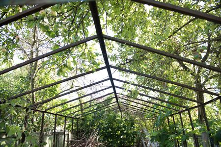 farm structure: An agriculture farm with lush greeneries in Minsk. The iron structure is used to provide shade during rainy season and help prevent damage of crops.