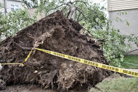 arbol de problemas: A large tree fell over onto a home after a wind storm.