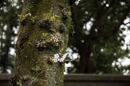 mosses: On this picture, a branch of a tree is seen with ferns and mosses growing on it. Flowers are also seen growing on the branch of the tree. On the background, other green trees are seen. Stock Photo