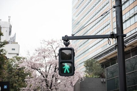 A traffic signal showing sign on the road. The green sign indicates pedestrians can now cross the road. On the background, buildings and trees full of flowers are seen. Banco de Imagens - 70775814