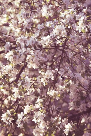Spring season blossom tree background